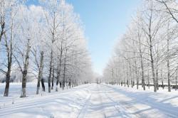 Сильный холод - причина кисты на щитовидке