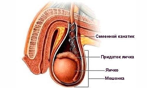 seks-pri-vospalenii-semennogo-kanatika